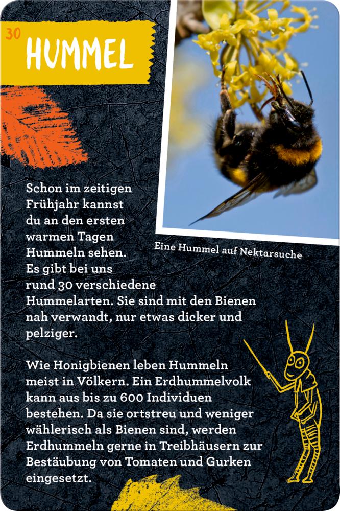 50 Insekten, Spinnen & Co. (Nature Zoom)