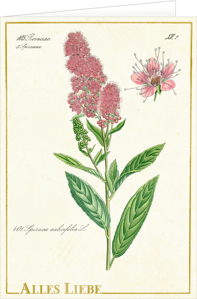 Grußkarte mit Kuvert - Sammlung Augustina
