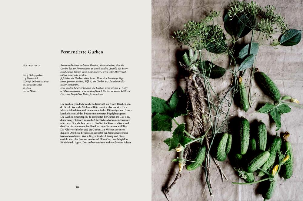Erde, Salz & Glut (Krautkopf) - Gemüseküche