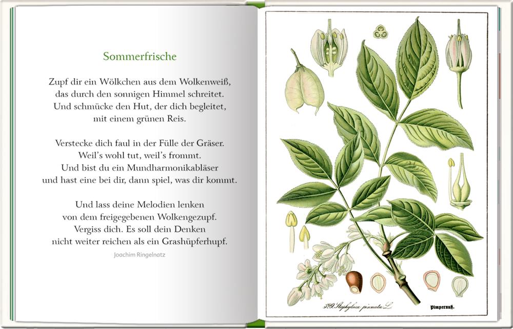 Kleine Auszeiten: Komm mit in die Natur (Geschenkset) Augustina