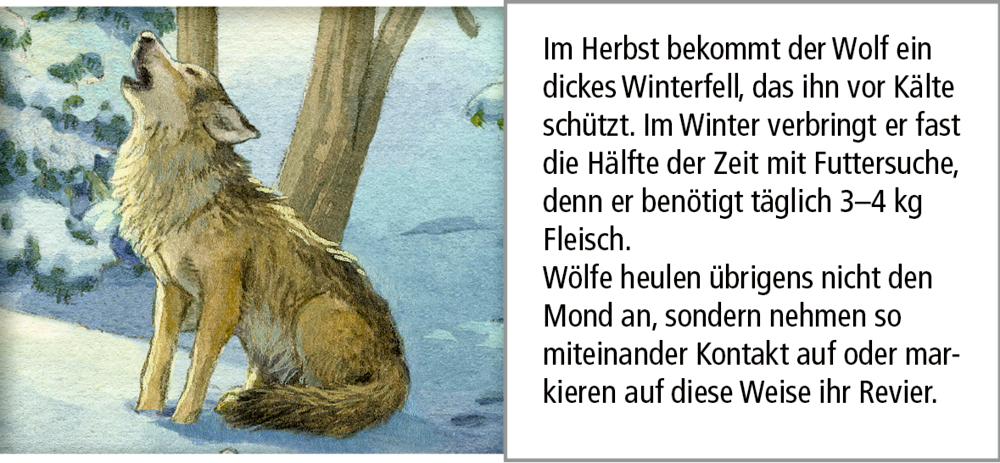 Hört ihr die Tiere im Winterwald?, Sound-Adventskalender